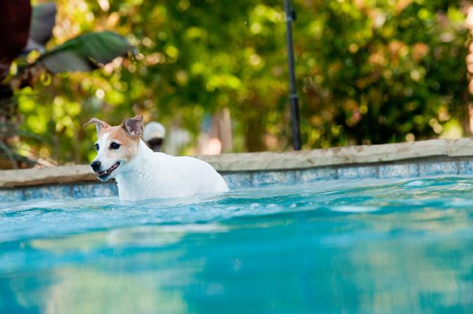Apex Pavers and Pools Sponsors Humane Society
